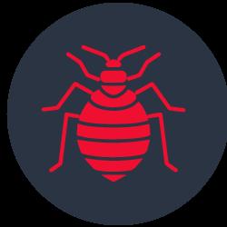 Bed Bugs Control Carrara