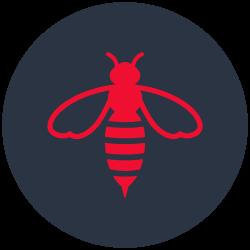 Bees And Wasps Control Carrara