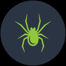 Spider Control Carrara